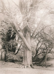 """Grassy Slope. Evening"" © Iván B. Pallí. ""A special tree in Corstorphine Hill, Edinburgh."" Approx. 25x33cm hand-printed silver gelatin lith print on Kodak Bromide paper. Signed and numbered original print, edition 1/5, offered at $500."