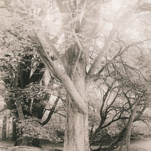 """""""Grassy Slope. Evening"""" © Iván B. Pallí. """"A special tree in Corstorphine Hill, Edinburgh."""" Approx. 25x33cm hand-printed silver gelatin lith print on Kodak Bromide paper. Signed and numbered original print, edition 1/5, offered at $500."""