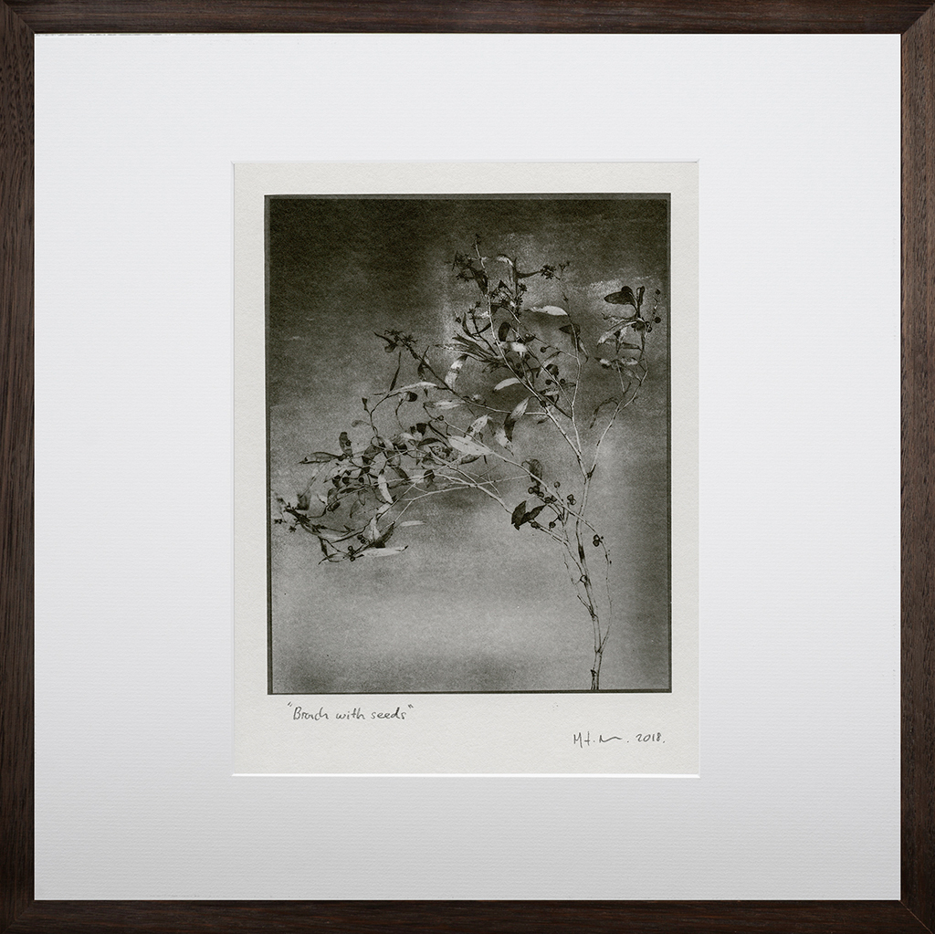 """""""Branch With Seeds 2"""" © Mat Hughes. Found, Little Desert National Park, Victoria. Approx. 6.5x8.5"""" (16.5x21.5cm) handcrafted silver gelatin tree bark still-life study from scanned large format 4x5 negative. Printed on fibre paper and bonded on 16x16"""" (40.5x40.5cm) Forex foamboard ready for framing. Edition of 3 unique signed prints. Offered by GALLERY5X7 at $250."""