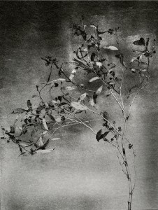 """""""Branch With Seeds"""" © Mat Hughes. Found, Little Desert National Park, Victoria. Approx. 6.5x8.5"""" (16.5x21.5cm) handcrafted silver gelatin tree bark still-life study from scanned large format 4x5 negative. Printed on fibre paper and bonded on 16x16"""" (40.5x40.5cm) Forex foamboard ready for framing. Edition of 3 unique, signed prints."""