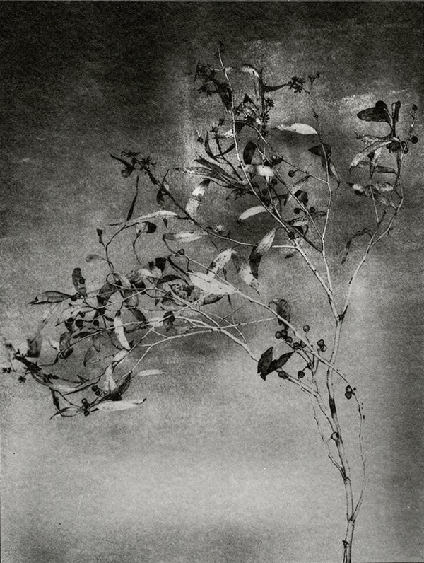 """""""Branch With Seeds"""" © Mat Hughes. Found, Little Desert National Park, Victoria. Approx. 6.5x8.5"""" (16.5x21.5cm) handcrafted silver gelatin tree bark still-life study from scanned large format 4x5 negative. Printed on fibre paper and bonded on 16x16"""" (40.5x40.5cm) Forex foamboard ready for framing. Edition of 3 unique signed prints. Offered by GALLERY5X7 at $250."""