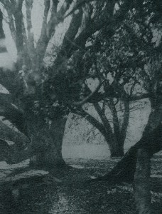 """""""Cork Oaks"""" © Mat Hughes. Mt. Beckworth, Victoria. Approx. 6.5x8.5"""" (16.5x21.5cm) handcrafted silver gelatin tree bark still-life study from scanned large format 4x5 negative. Printed on fibre paper and bonded on 16x16"""" (40.5x40.5cm) Forex foamboard ready for framing. Edition of 4 unique signed prints. Offered by GALLERY5X7 at $250."""