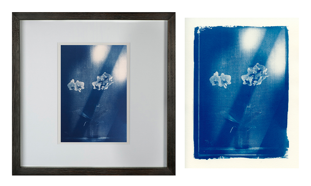 """""""Ester's Orchid 3"""" © Mat Hughes. Approx. 6.75x9.5"""" (17x24cm) handcrafted cyanotype still-life study behind screen from scanned large format 4x5 negative. Printed on watercolour paper and bonded on 16x16"""" (40.5x40.5cm) Forex foamboard ready for framing. Edition of 5 unique signed prints. Offered by GALLERY5X7 at $250."""