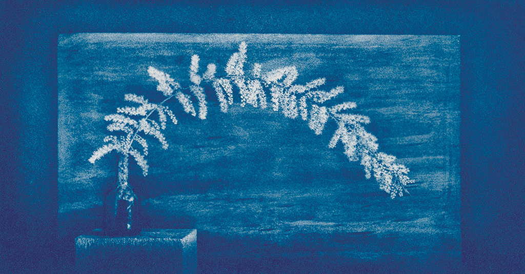 """""""Flowering Tamarisk"""" © Mat Hughes. Approx. 4.5x7.9"""" (11.5x20cm) handcrafted cyanotype still-life study from scanned large format 4x5 negative. Printed on watercolour paper and bonded on 16x16"""" (40.5x40.5cm) Forex foamboard ready for framing. Edition of 4 unique signed prints. Offered by GALLERY5X7 at $250."""