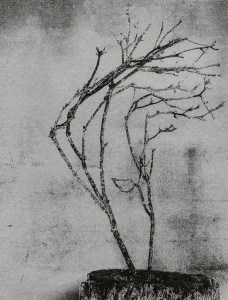 """""""Windblown Branch"""" © Mat Hughes. Found, Little Desert National Park, Victoria. Approx. 6.5x8.5"""" (16.5x21.5cm) handcrafted silver gelatin tree bark still-life study from scanned large format 4x5 negative. Printed on fibre paper and bonded on 16x16"""" (40.5x40.5cm) Forex foamboard ready for framing. Edition of 3 (last print!) unique signed prints. Offered by GALLERY5X7 at $250."""