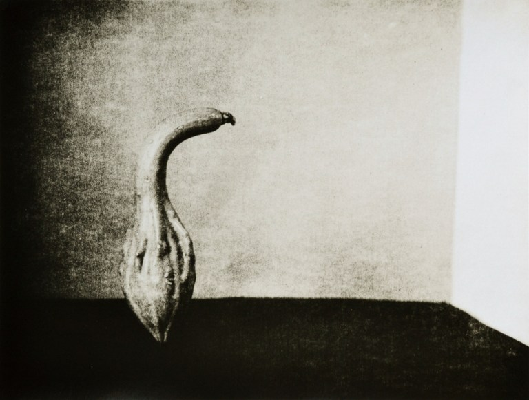 """""""Gourd 2"""" © Barry Mayfield. Approx. 8X10.5"""" (20X27cm) handcrafted alternative process photograph (silver gelatin lith print). GALLERY5X7 offers this signed, original print at $250."""
