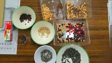 植物の種、豆など自然の素材を使いました。ここにはありませんが、カボチャやスイカの種もアクセントになっておすすめ。