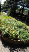 Nag Botanical Park w/ Dayat & Ka Wi (7 Augustus 2016)(9)