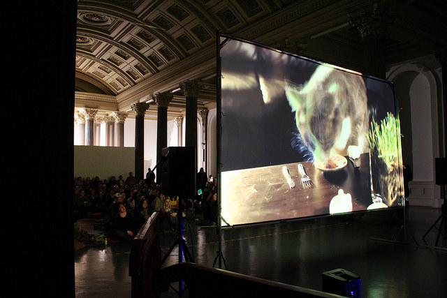 Internet Cat Video Festival, Gallery 1, GoMA