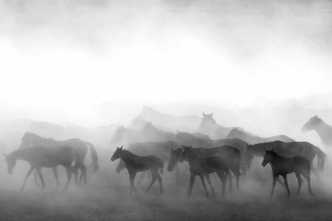 wild horses 3