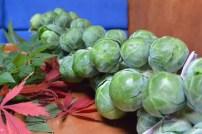 brussel sprouts close up