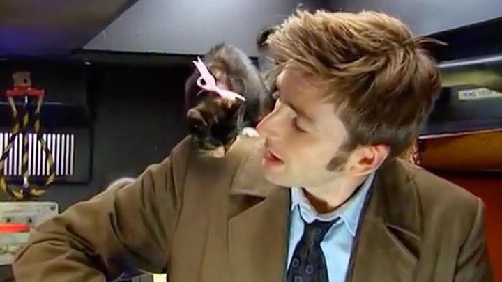 Zwierzęta Whoniversum: Dziesiąty Doktor i młody przedstawiciel rasy Catkind.