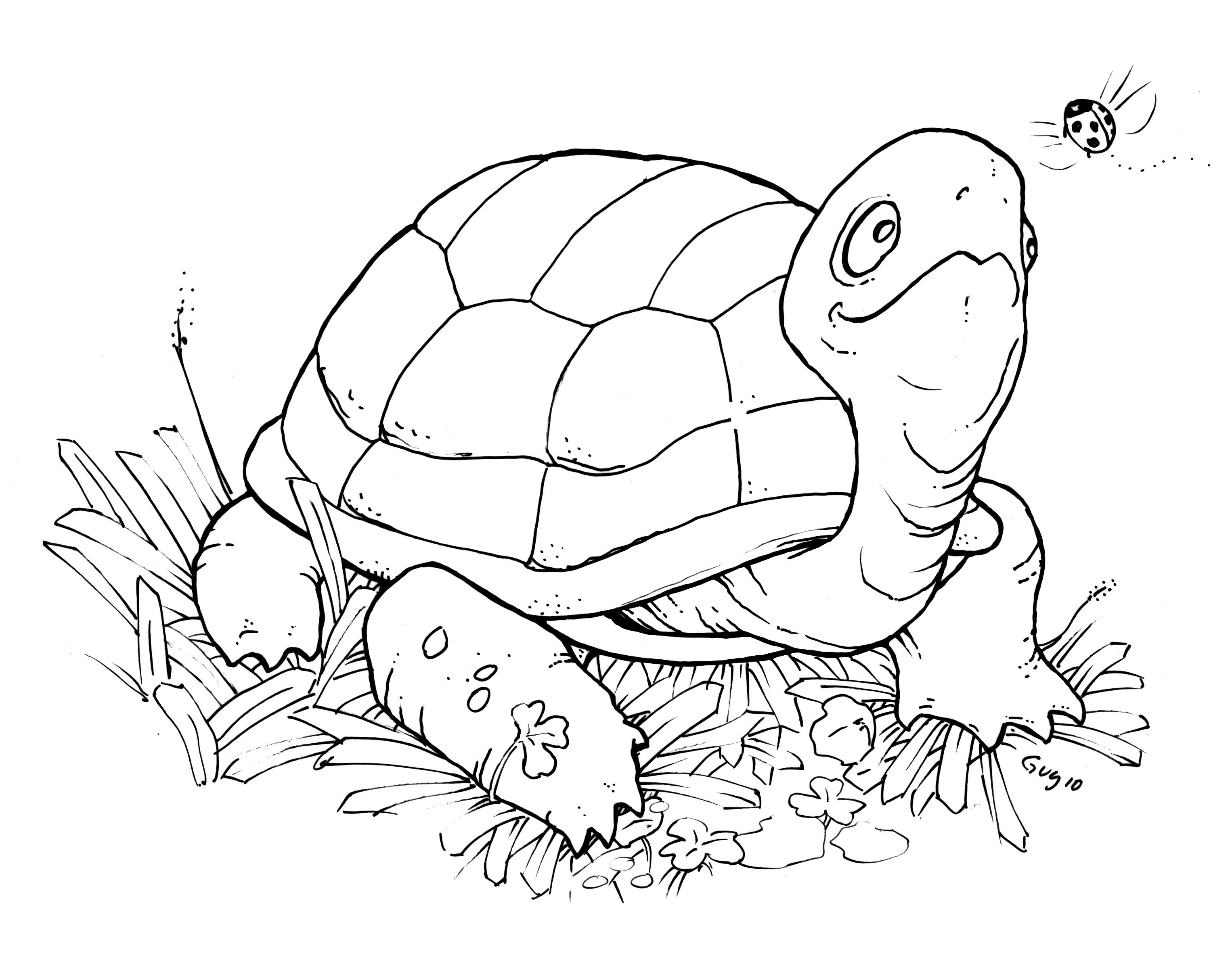 Turtle Digital Stamp Freebie Happy Saturday