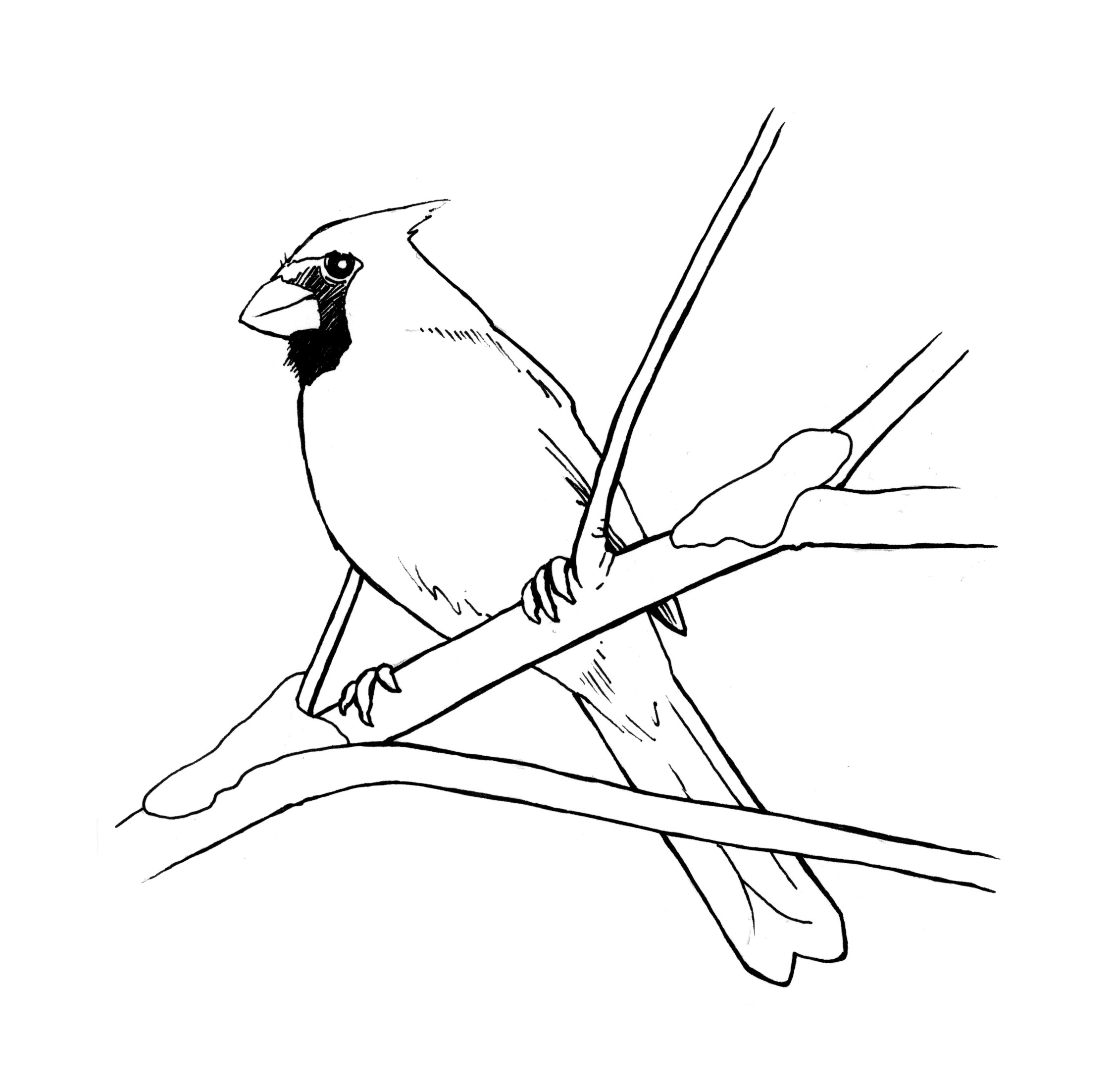 Cardinal Bird Outline