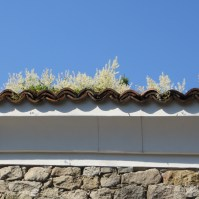 Plants growing in gutter