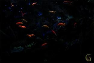 Fish-thousand-colors-1