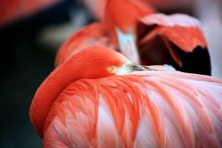 Flamingo-1-900