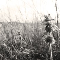 Grit and thistle