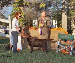 GALRC 11-14-15 BOB – Ch. Zinfndel's Spanish Oak (1)