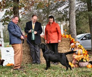 GALRC 11-15-15 Best Puppy – Amen Hadleigh The Hunting Party (1)