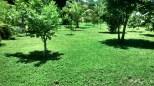 Marcos Grass