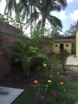 casa-bella-plants