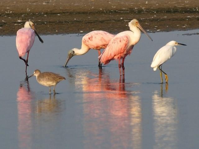 CMR-BIRDS