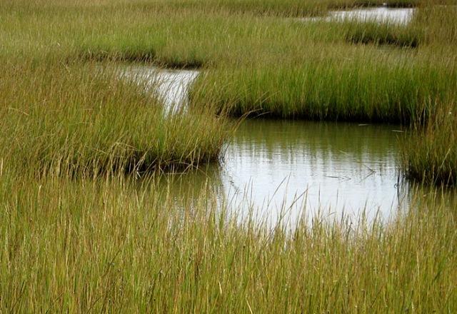 CMR-cordgrass marsh