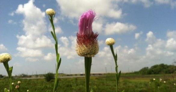 CMR-FLOWER