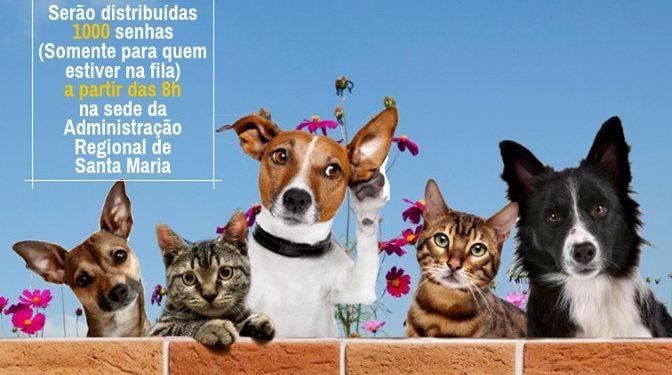Cadastro para castração gratuita de cães e gatos tem início nesta sexta-feira (16/08) em Santa Maria