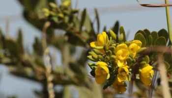 Webinar reúne especialistas para debater o bioma Cerrado