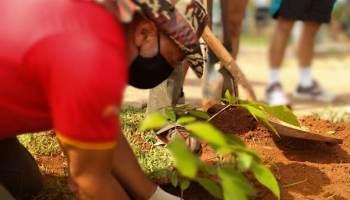 Tempo de Plantar: Gama ganha mudas de árvore