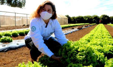 A presidente da Emater-DF, Denise Fonseca, colhe alface no espaço da Agricultura Familiar