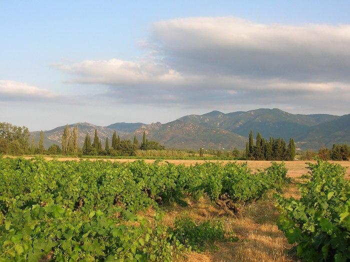 После обеда нас ждёт необычная дегустация вин в семейной винодельне, расположенной у подножия горной гряды Serra de l'Albera.