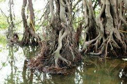 Wurzeln im Wasser