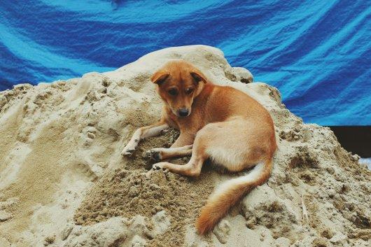 Ein Hund ruht sich auf einem Haufen Sand aus. Nur er weiß, warum.