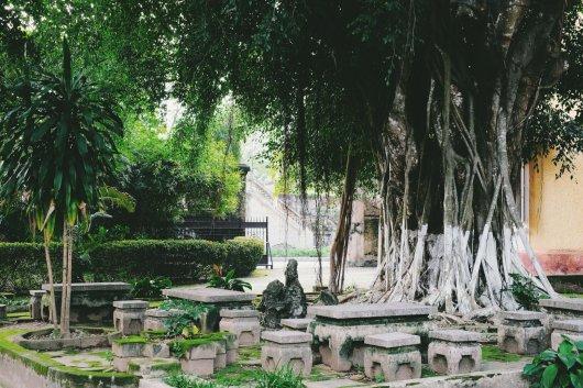 Platz zum Ausruhen unter einem schattenspendenden Baum