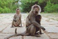 Affenmutter mit ihrem Jungen