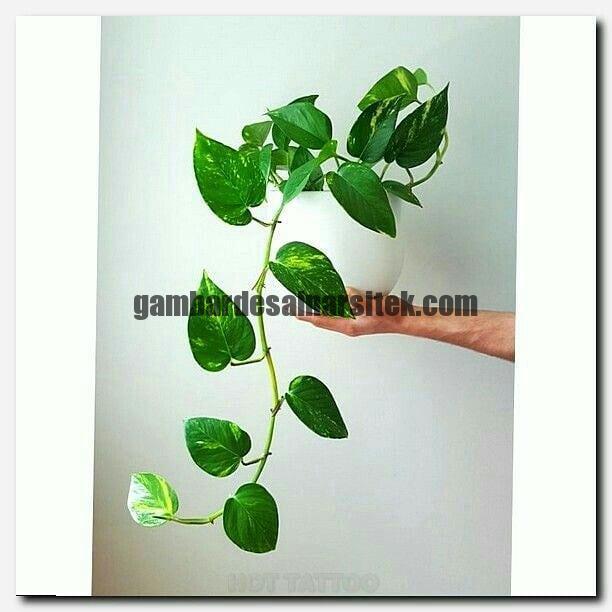 Jasa Pembuatan dan perawatan taman Bandung Jakarta Bunga hias 9