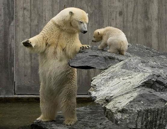 15 Gambar Beruang Lucu Layaknya Manusia  GambarGambarco
