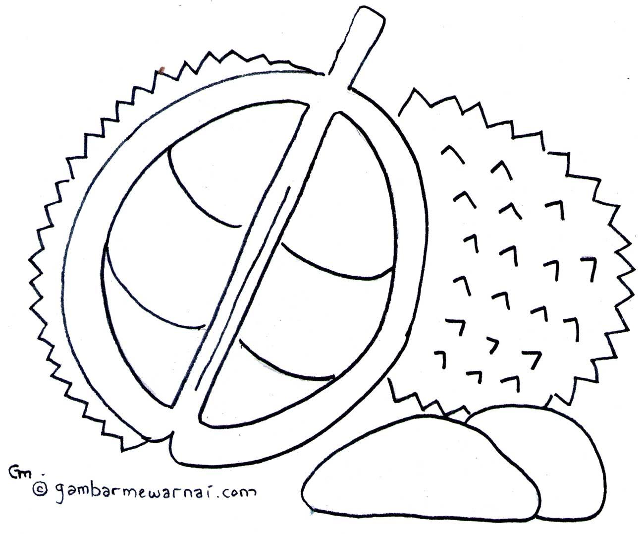 Mewarnai Buah Durian Gambar Mewarnai