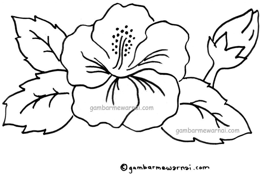 Download Gambar Mewarnai Bunga Kembang Sepatu  Gambar