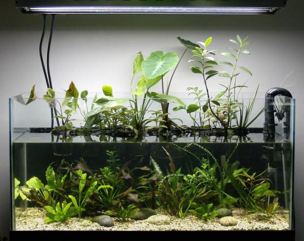Planta de interior para reducir nitratos  GambasdeAcuariocom