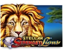 Serengeti Lions Stellar