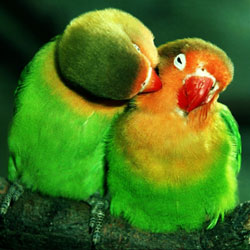 lovebirds freeroll slots tournament