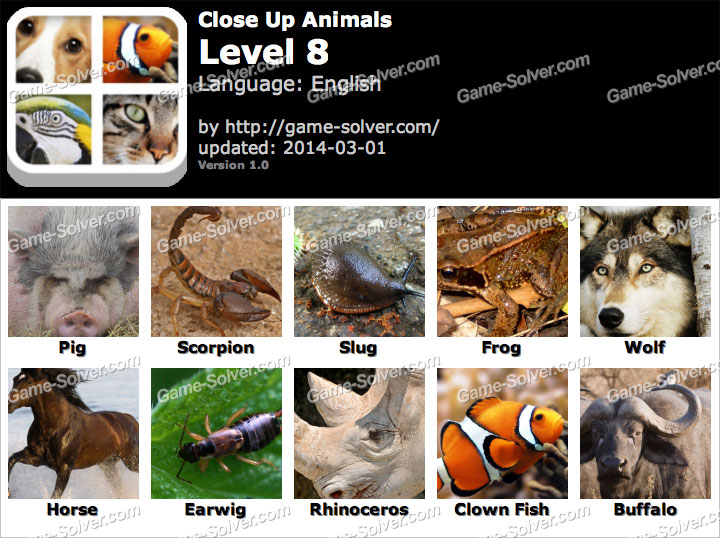 Close Up Animals Level 8