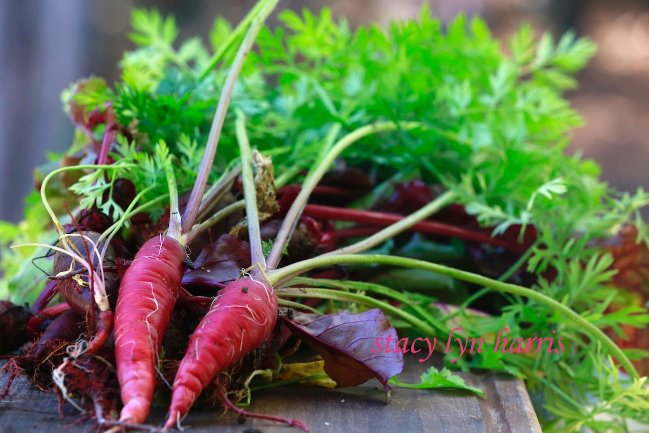 Carrots have the highest content of vitamin A of any vegetable. That's what causes the bitter taste when the carrot gets too big.