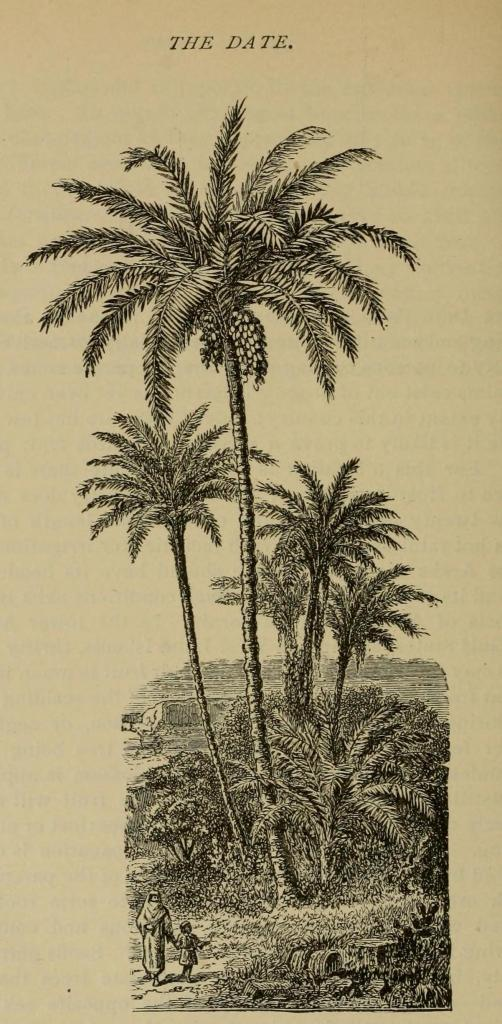 Image from J.J. Thomas' The American Fruit Culturist (1897)