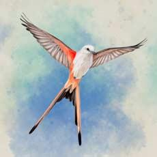 Скачать Wingspan (Крылья) на Android iOS