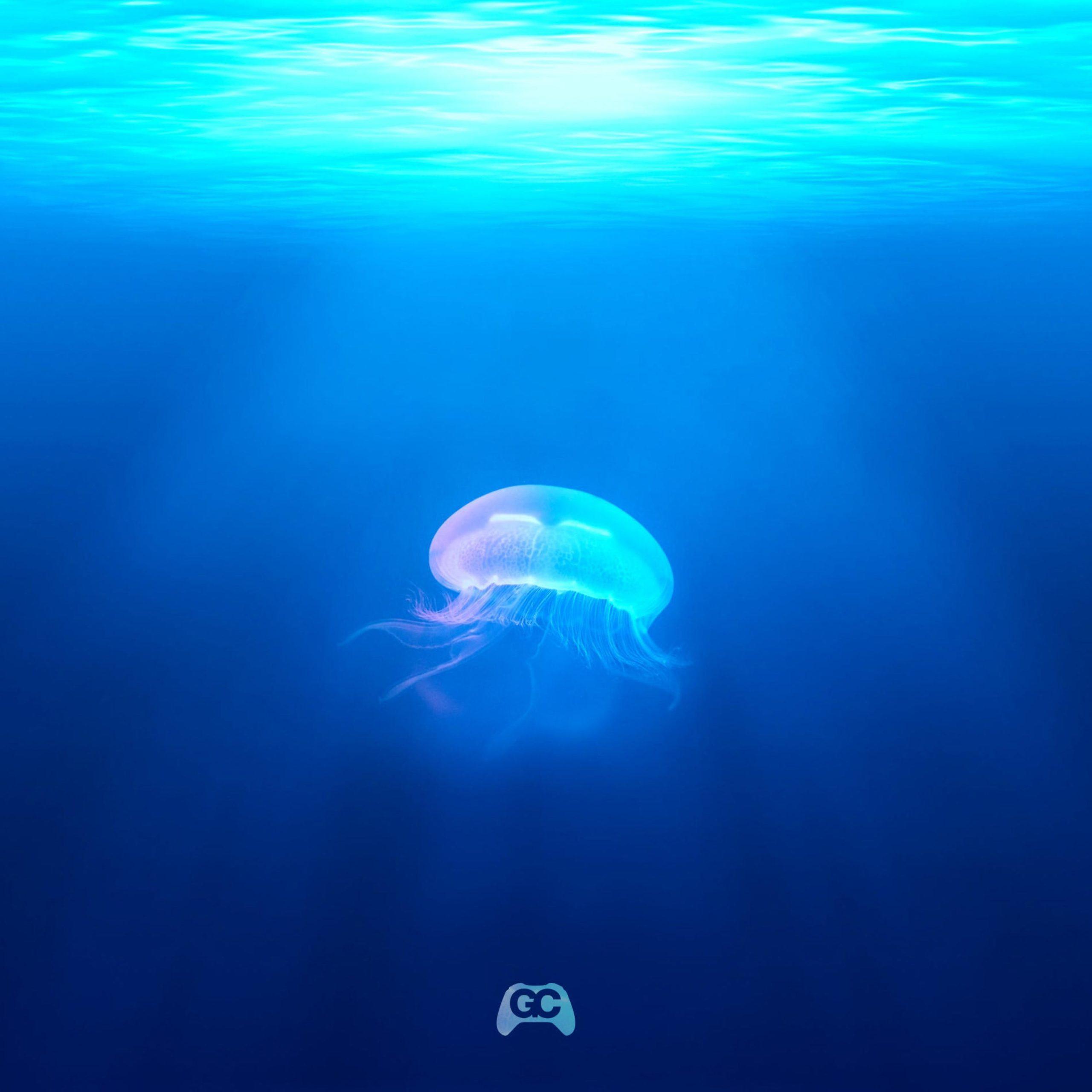 Aquatic Ambiance – Koreskape